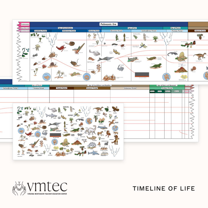 The Montessori Timeline of Life from Michael Dorer at VMTEC